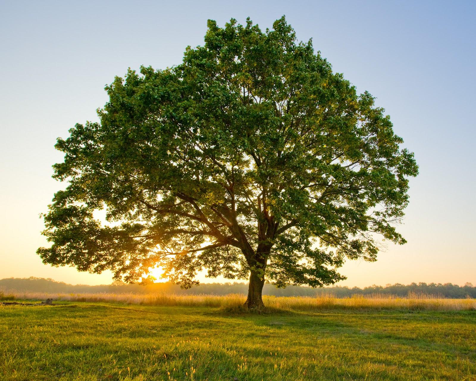 Tree-111.jpg